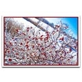 Berries - D288223