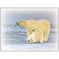 Polar Bears - D2684204
