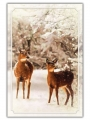 Nature's Wonder - C2456316