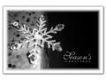 Sparkling Gift - C2456334
